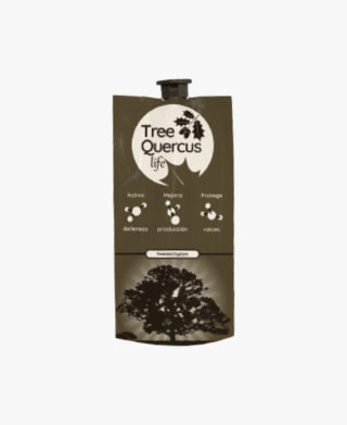 Tree Quercus Life